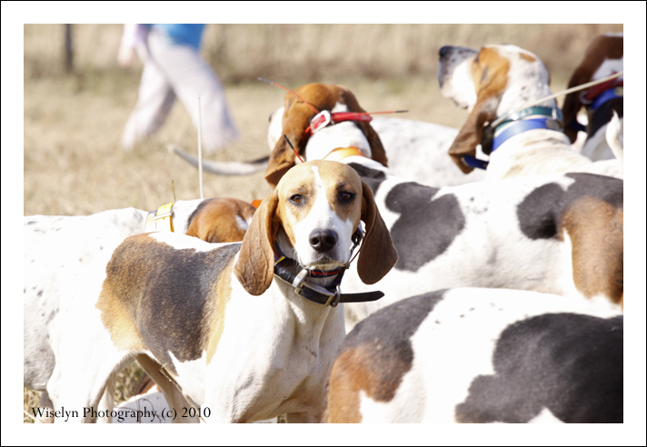 2010 Blessing of the Hounds Photography - Riverplains Farm - Strawberry Plains, Tennessee